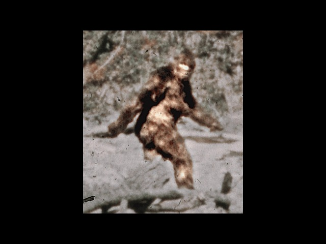 Patterson Bigfoot Film with High Quality Frames.