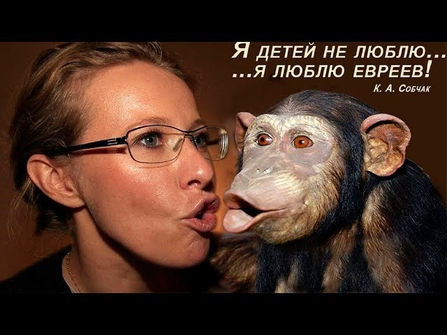 Сосцы Собчак и другие приключения оппозиционеров
