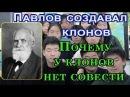 Павлов создавал клонов. Почему у клонов нет совести. Мирянин Ведагор