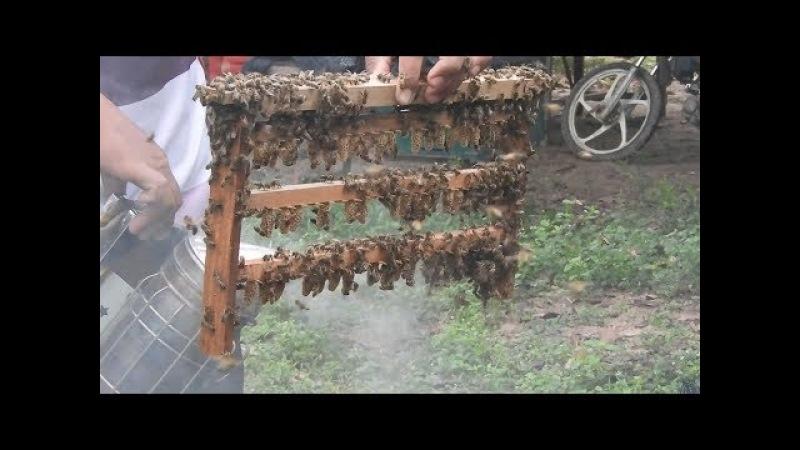 Queen rearing methods   Rarsing honey bee queens   Producing queen bees   Honey bees   Beekeeping