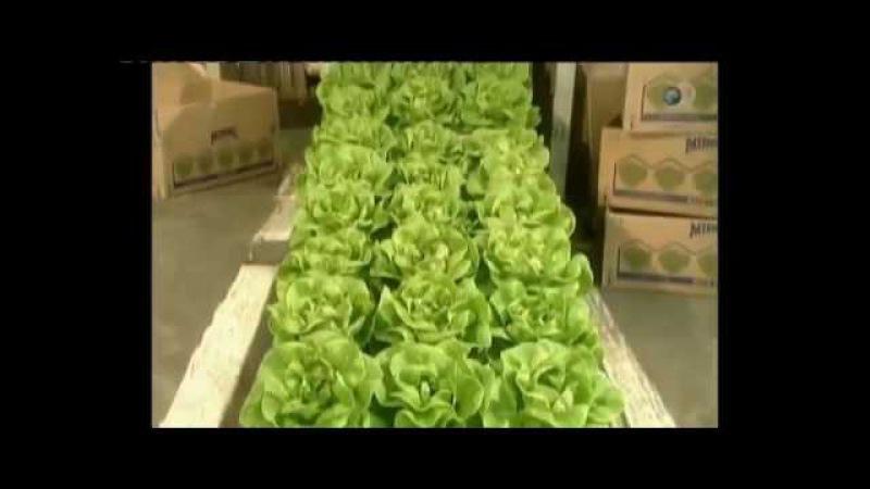 Гидропонное выращивание салата Из чего это сделано