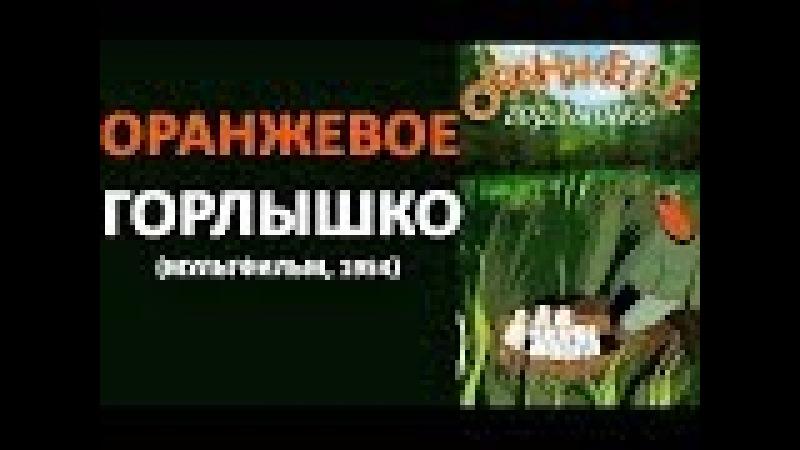 Мультфильм 1954 г В Бианки Оранжевое горлышко HD