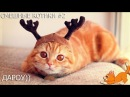 Без кота жизнь не та! Смотрите 2 часть. Смешные котики, видео котиков смешные . ТОП 2018 года
