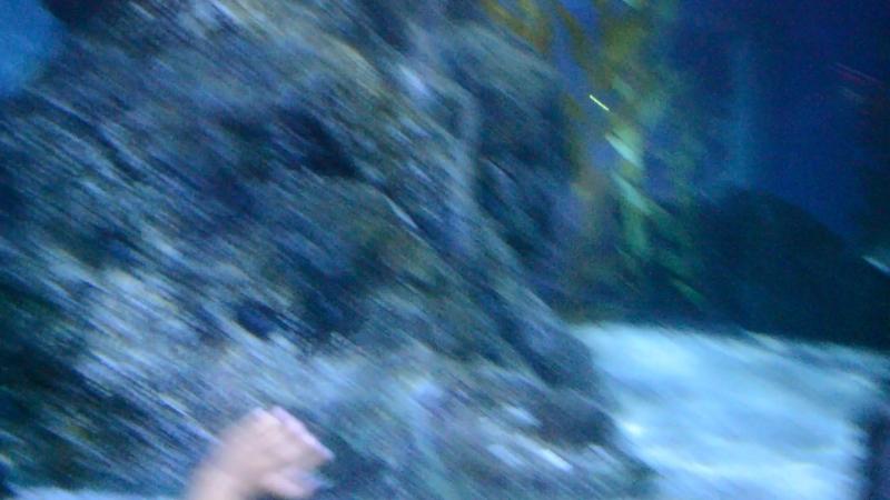 Океанариум В Бангкоке.Siam Ocean World