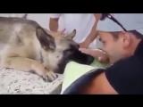 Молодой человек прощается со своей собакой в сцене, которая заставит вас плакать