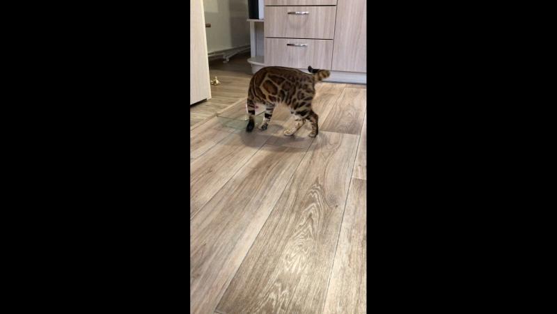 Том Круз, это наш молодой племенной кот