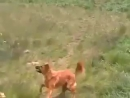 Собака-Уебака-оборжака