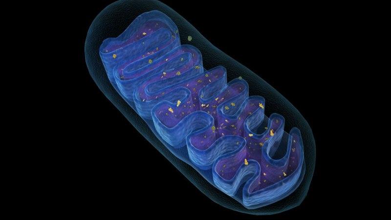 4. АТФ и Энергетика клетки (9 класс) - биология, подготовка к ЕГЭ и ОГЭ 4. fna b ythutnbrf rktnrb (9 rkfcc) - ,bjkjubz, gjlujnj
