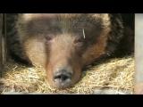 Медведи проснулись в Орто дойду