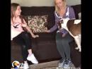 Забитую испуганную собаку нашли добрые люди, теперь она счастливый песик.