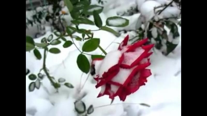 (Pasha Began ) - Фристайл и Н Кирсо букет бумажных роз