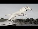 ПОПРОБУЙ НЕ ЗАПЛАКАТЬ Самая грустная песня про собак До слёз Песня которая трогает душу!.mp4