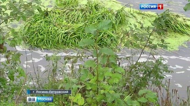 Вести-Москва • Лосино-Петровский погрузился в зловоние