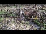в лесу у родника