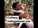 Собаку спасли от раковой опухоли