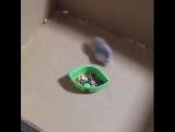 Hamster drift