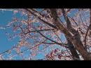 02.12.2017 Суботняя прогулка в -20Сосны видео 2