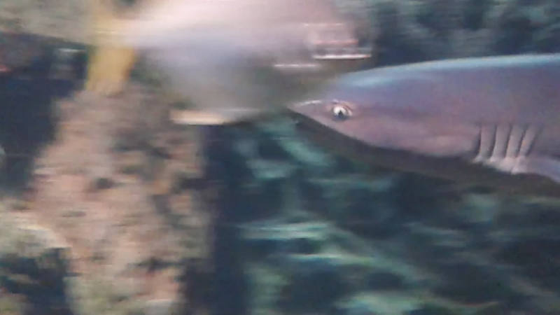 Океанариум в Сочи