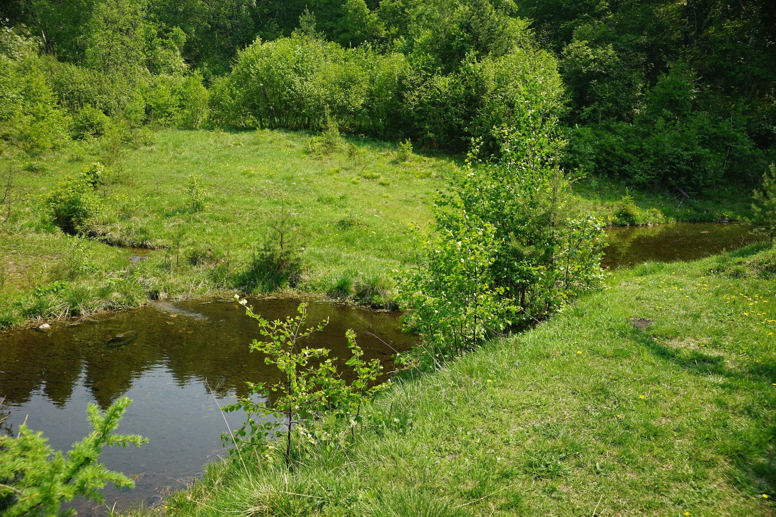 Дамба и плотина для пруда Разведение карпов 13