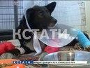 Циничный наезд - водитель переехал собаку на автозаправке