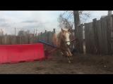 Талант пони