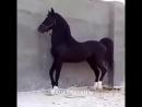 [v-s.mobi]Лошадь танцует лезгинку.mp4