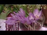 Осенняя компопозиция из нежно-лиловых оттенков: создаём букет с флористом Натал...