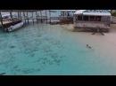 Мальчик купаясь на Багамах не заметил как к нему подплыли четыре акулы