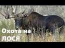 Соревновательная охота на лося