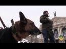 Собачий ПТСР лікується тільки любов'ю