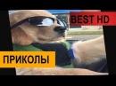 ПРИКОЛЫ 2018 с котами VIDEO ПРИКОЛЫ с животными BEST приколы до слез под музыку