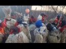Под бряцание шаманских бубнов: Стая грозных румынских медведей атакует хозяйские дворы