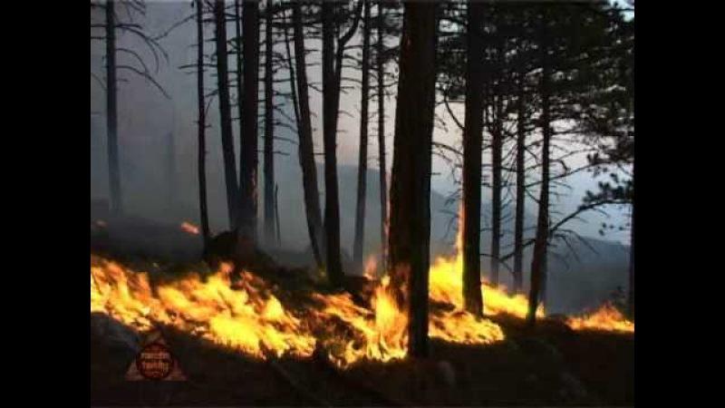 Пожар в Алупке_2007_Firestorm In Alupka