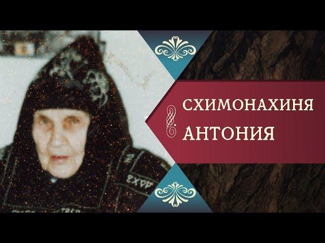 ИЗ НЕИЗДАННОГО О СХИМОНАХИНЕ АНТОНИИ