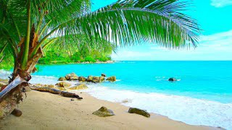 Tropical Island Beach Ambience Sound - Ocean Sounds and Singing Birds Ambience For Relaxation
