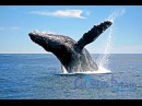 Whale Watching in Samana by Bus Punta Cana Tours
