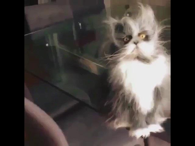 Ёшкин кот ( via kbmood )