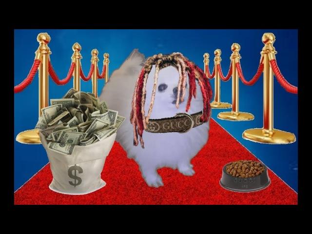 Gucci Dog (RIP GABE THE DOG)