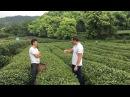 Разговариваем с хозяином чайной плантации. Китайский чай Лунцзин