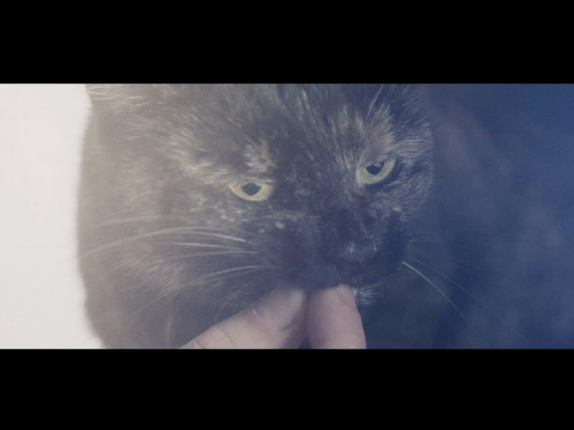 Köter Katze   Positivity - Wun Two (ft. Melodiesinfonie)