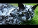 🔴История необыкновенно красивого мраморного кота