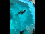 Sea Lion Yells Like Man