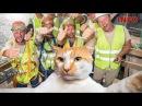 Главный надзиратель стройки века кот Мостик пройдет в Крым по Керченскому мосту