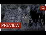 Deadliest cat on Earth - Big Cats Preview - BBC One