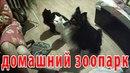 про село - домашний зоопарк / реальная жизнь в русской деревне / сельхоз-влог