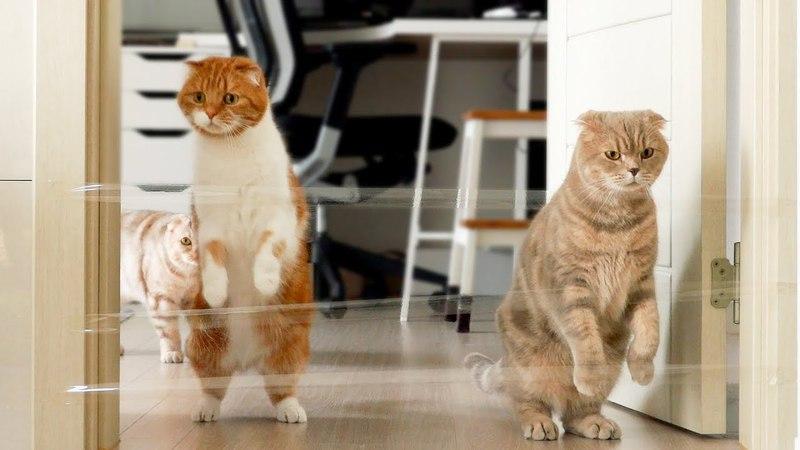 실제로 없는 장애물을 넘었을 때 고양이들의 반응은