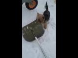Перс, ну не любит он ! когда чистят снег ! А может не доверяет.... хочет сам !