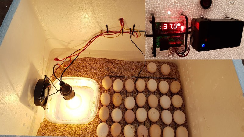 How to make a Hatching Egg Incubator at home