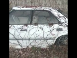 Toyota Crown .japan