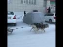 Krasota_yakutia_video_1518962332543.mp4
